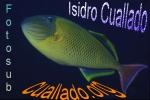 cuallado.org